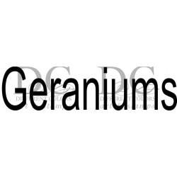 Different Colors S00429 Geraniums Tekst
