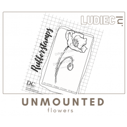 Different Colors SU00952-S00952 Poppy Flower Papaver klaproos